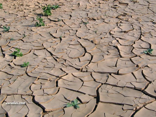 Click to download the After a Rainfall in the Desert