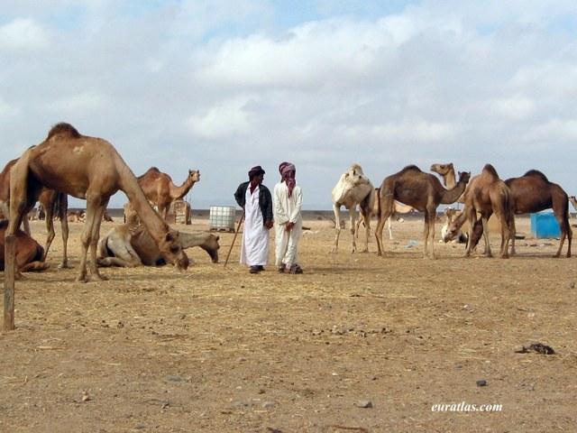 Cliquez ici pour télécharger Camel Traders
