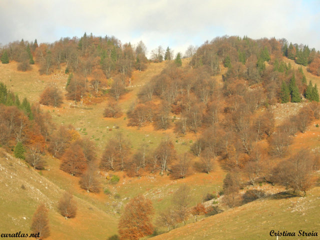 Click to download the Autumn Wood Near the Village of Sirnea, Piatra Craiului Mountains