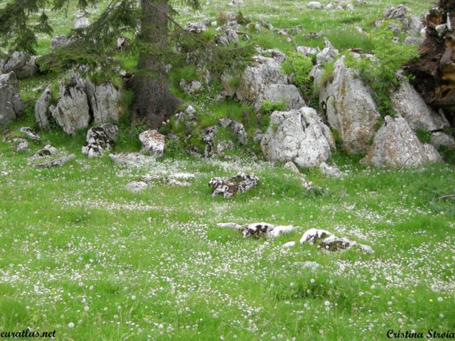 Click to download the The Zanoaga Glade, 1375 m., Piatra Craiului Mountains