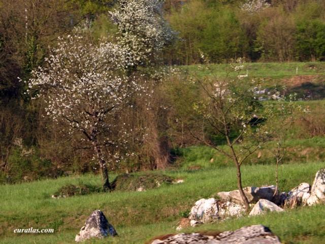Cliquez ici pour télécharger Slovenian Spring