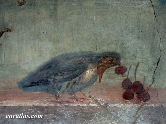 Click to download the A Bird, from a Roman Painting in Herculaneum