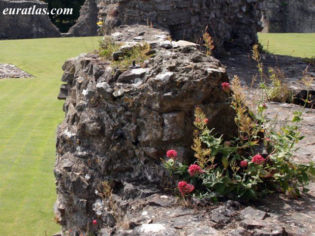 Click to download the Flowers in Denbigh Castle