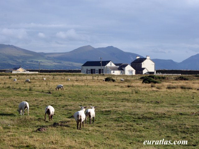 Click to download the Sheep at Dinas Dinlle