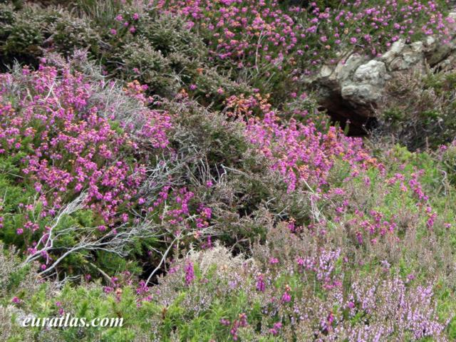 Click to download the Heather at Holyhead